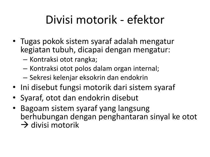 Divisi motorik - efektor