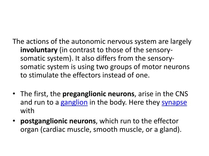 The actions of the autonomic nervous system are largely