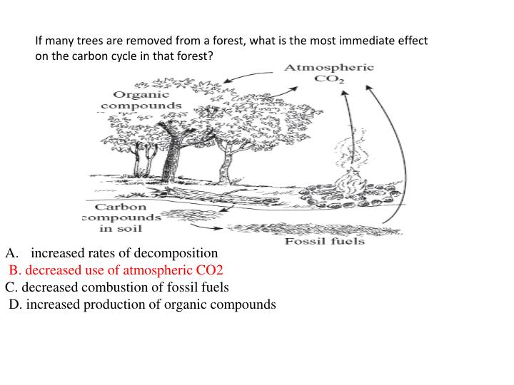 If many trees are removed from a forest, what is the most immediate effect on the carbon cycle in that forest?