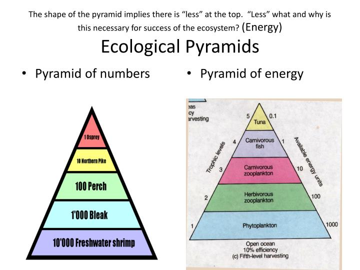 "The shape of the pyramid implies there is ""less"" at the top.  ""Less"" what and why is this necessary for success of the ecosystem?"