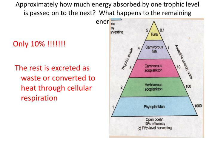 Approximately how much energy absorbed by one