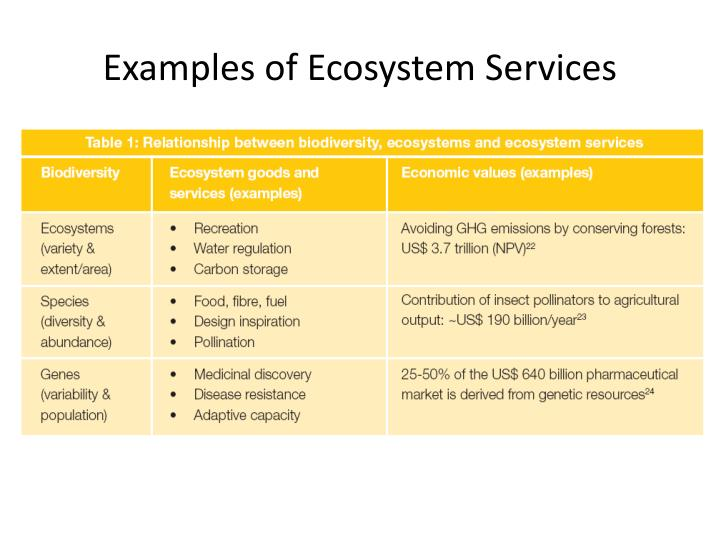 ecosystem structure resource shortage essay Ecological imbalance: its causes and effects in the biosphere  shortage of energy, degradation of marine ecosystems and depletion of mineral resources .