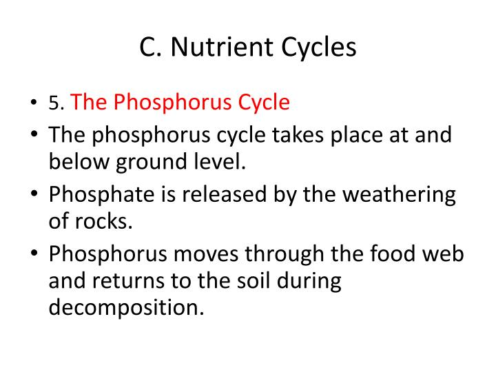 C. Nutrient Cycles