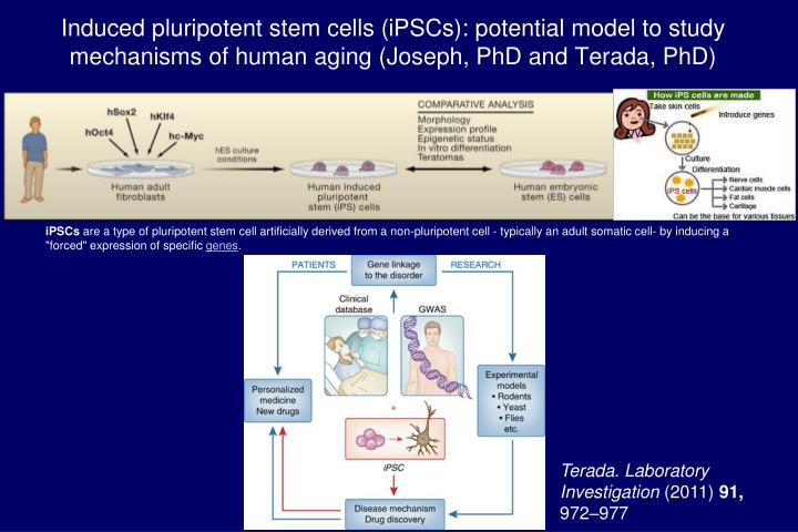 Induced pluripotent stem cells (