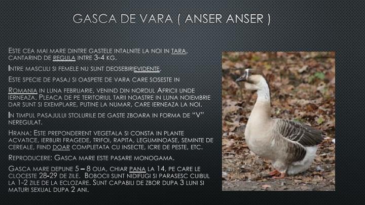 Gasca