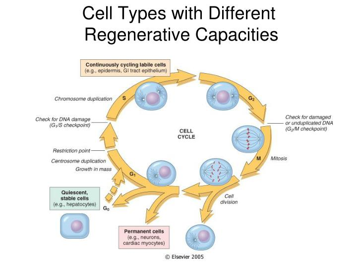 Cell Types with Different