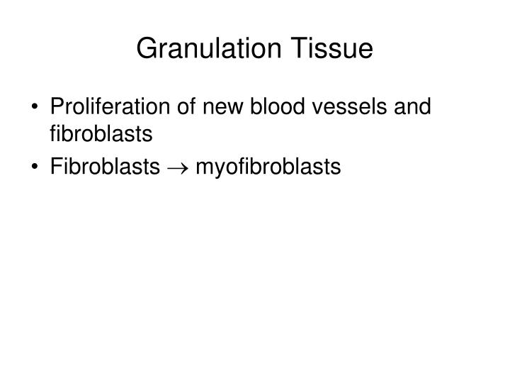 Granulation Tissue