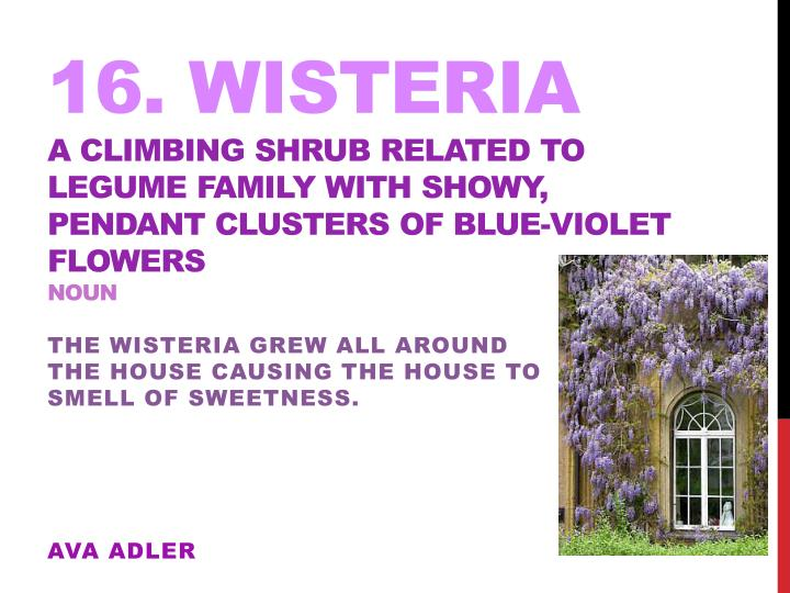 16. Wisteria
