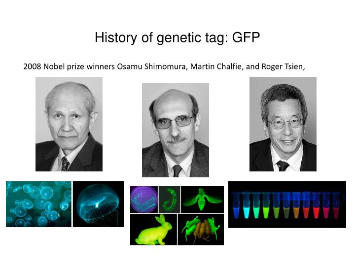 History of genetic tag: GFP