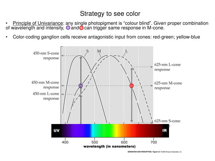 Strategy to see color