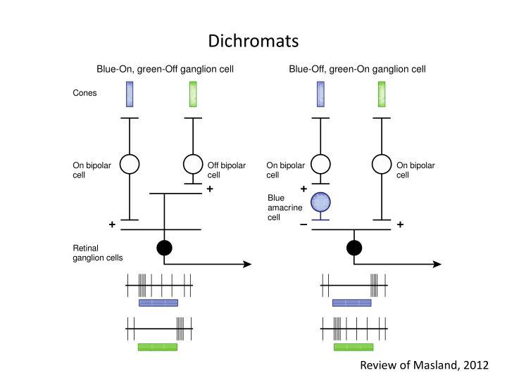 Dichromats