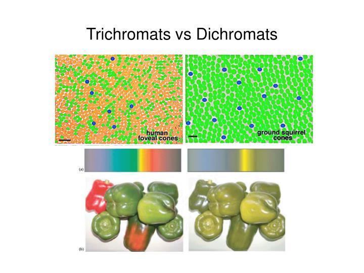 Trichromats