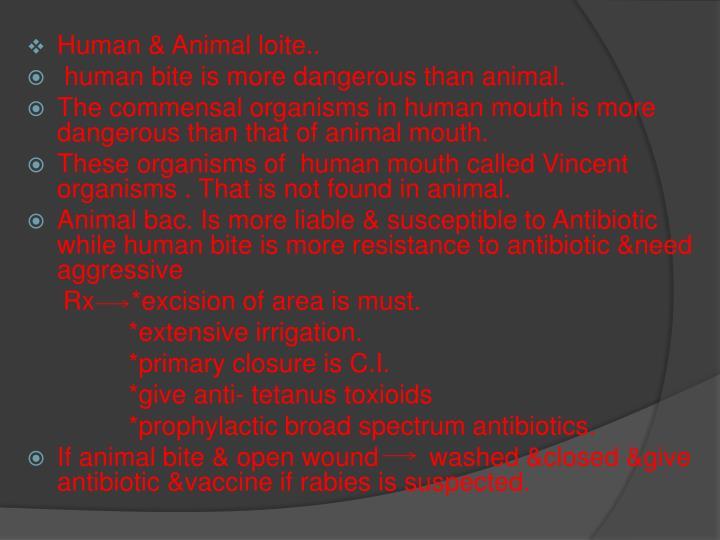 Human & Animal