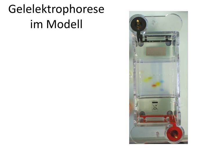 Gelelektrophorese