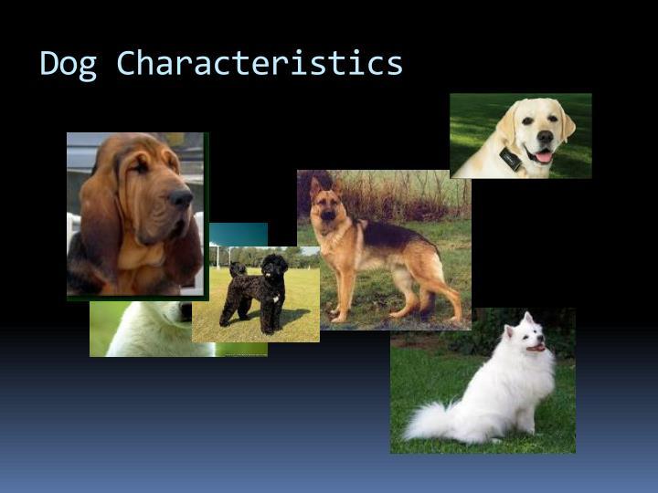 Dog Characteristics