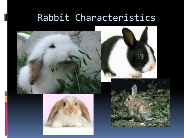 Rabbit Characteristics