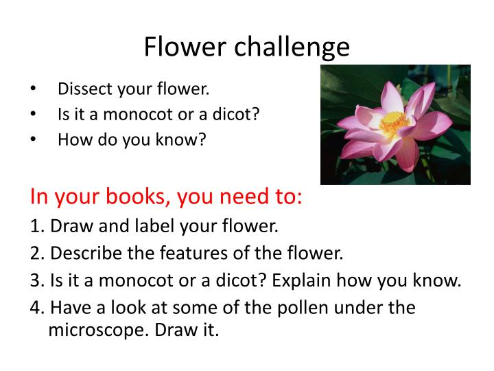 Flower challenge