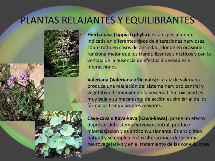 PLANTAS RELAJANTES Y EQUILIBRANTES