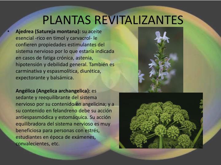 PLANTAS REVITALIZANTES