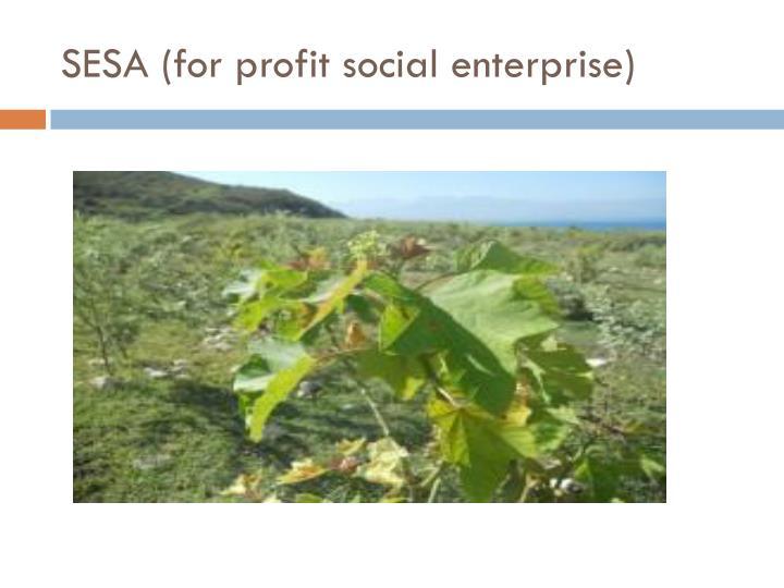 SESA (for profit social enterprise)