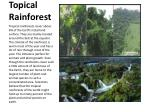 topical rainforest
