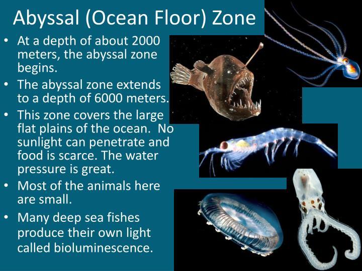 Abyssal (Ocean Floor) Zone