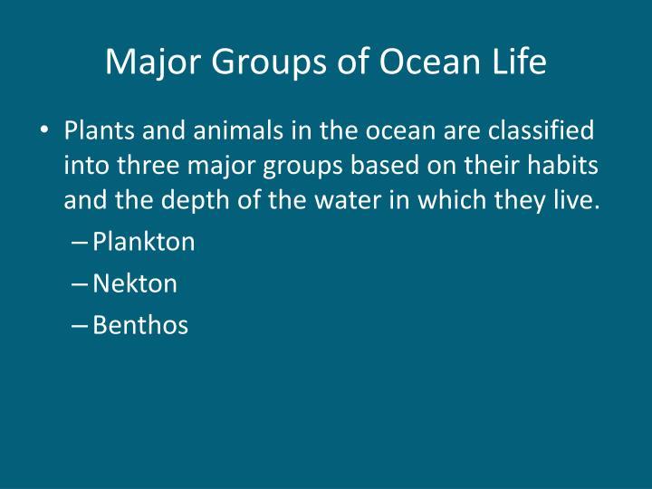 Major Groups of Ocean Life