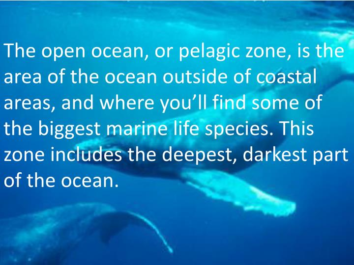 The open ocean, or pelagic zone, is the area of the ocean outside of coastal areas, and where you'll find some of the biggest marine life species. This zone includes the deepest, darkest part of the ocean.