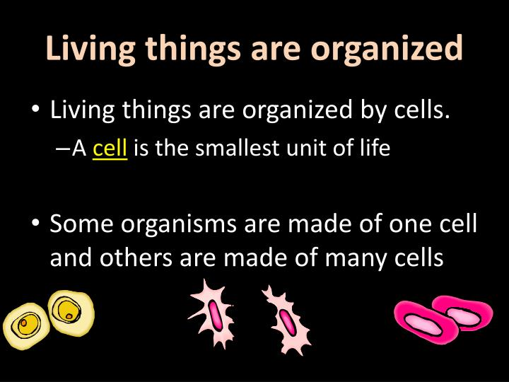 Living things are organized