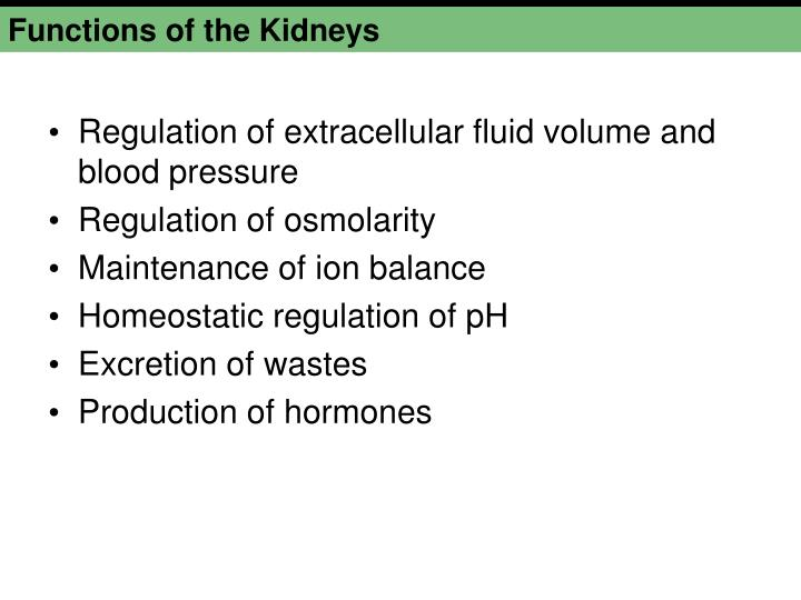 Functions of the Kidneys