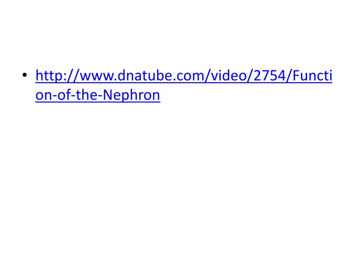 http://www.dnatube.com/video/2754/Function-of-the-Nephron