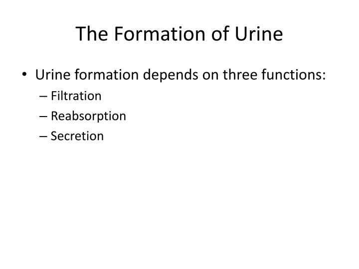 The Formation of Urine