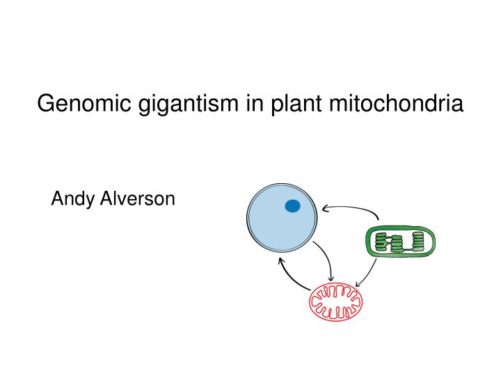 Genomic gigantism in plant mitochondria