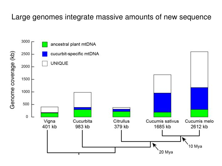 Large genomes integrate massive amounts of new sequence