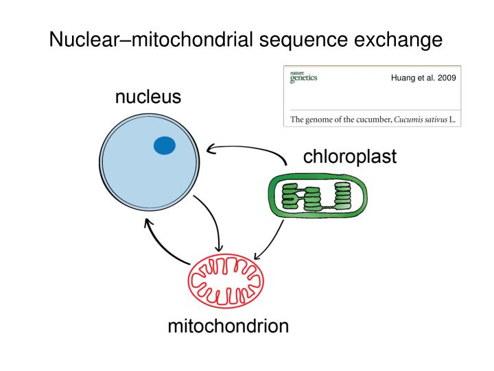 Nuclear–mitochondrial sequence exchange