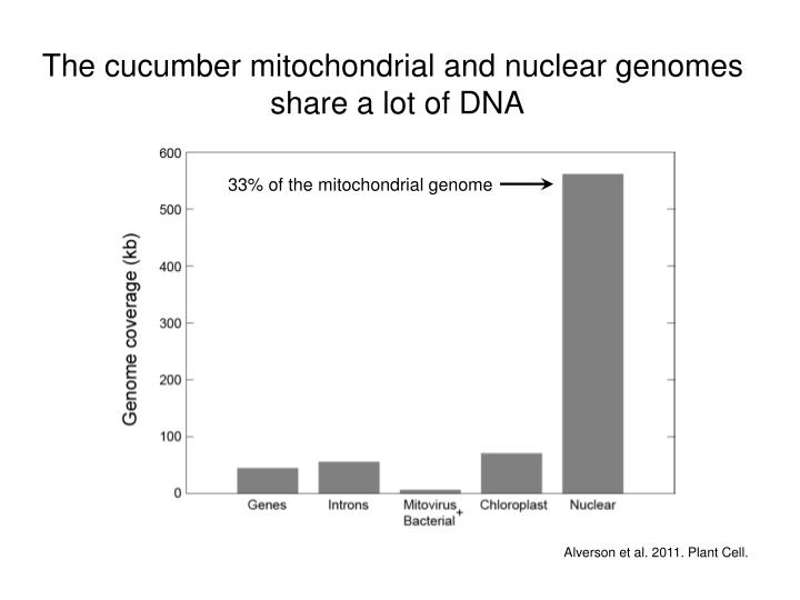 The cucumber mitochondrial and nuclear genomes