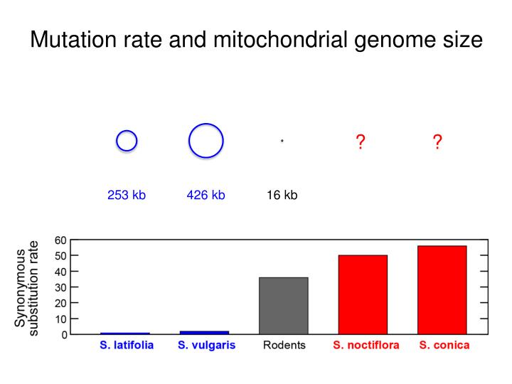 Mutation rate and mitochondrial genome size