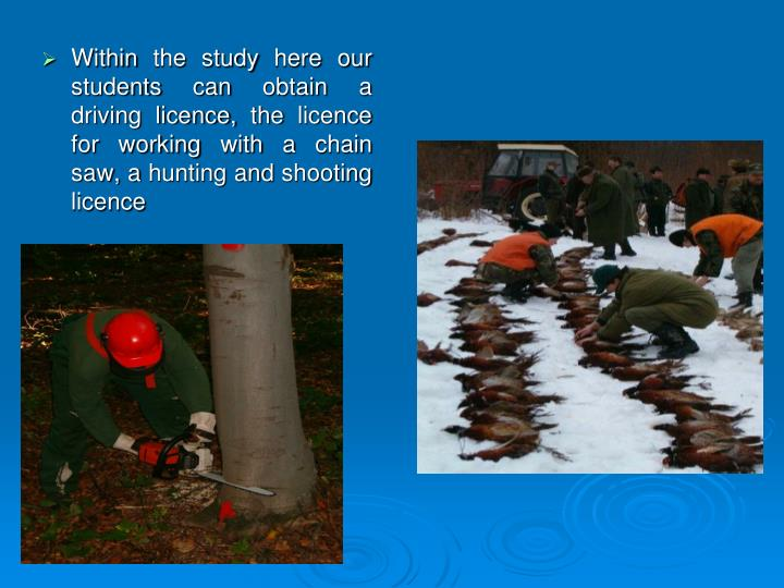 Within the study here our students can obtain a driving licence, the licence for working with a chain saw, a hunting and shooting licence
