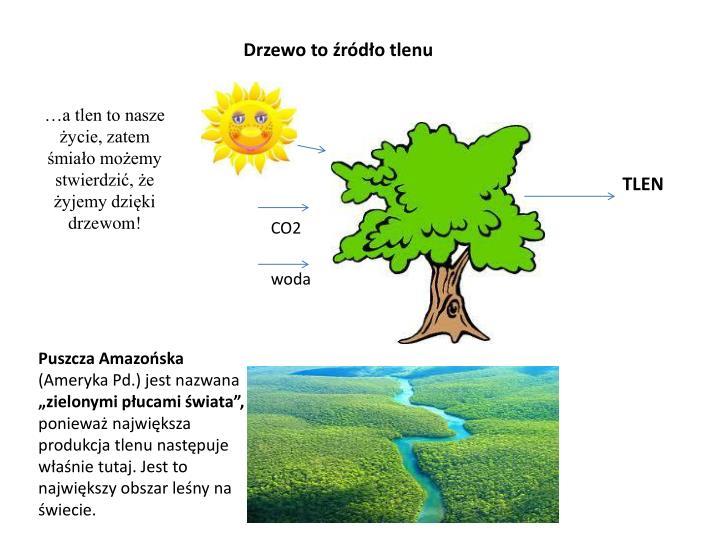 Drzewo to źródło tlenu