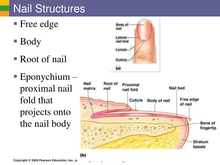 Nail Structures