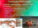 crustacean a ppendages
