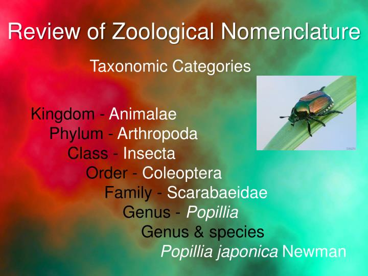 Review of Zoological Nomenclature