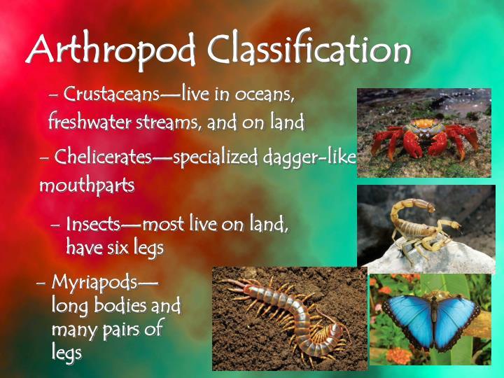 Crustaceans—live in oceans,
