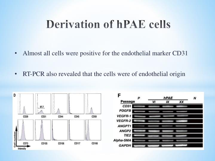 Derivation of hPAE cells