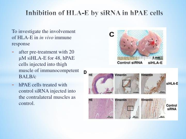 Inhibition of HLA-E by