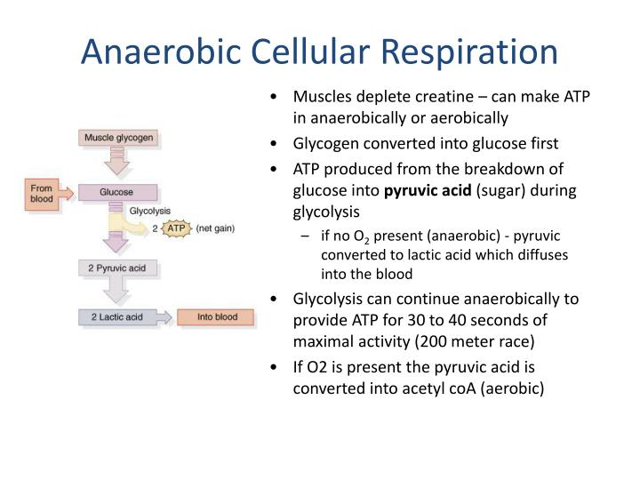 Anaerobic Cellular Respiration