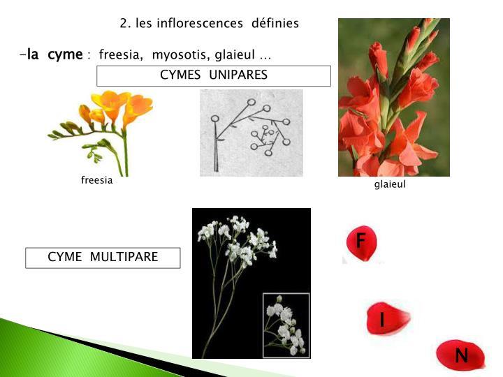 2. les inflorescences  définies