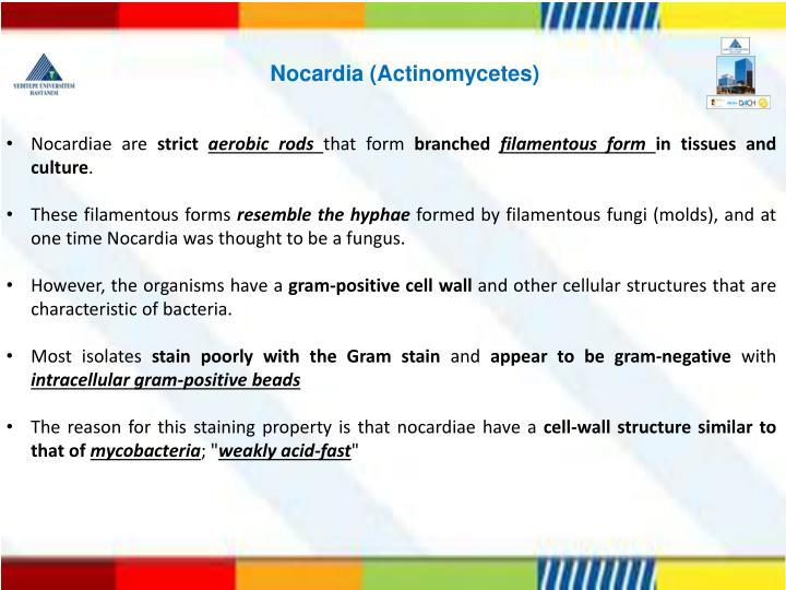 Nocardia (Actinomycetes)