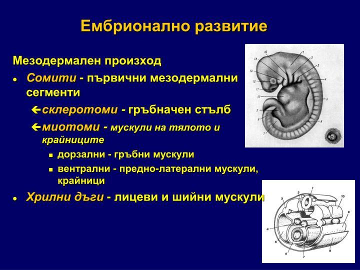 Ембрионално развитие