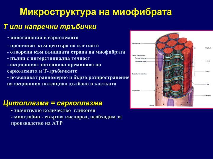 Микроструктура на